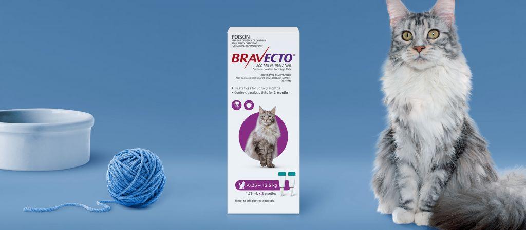 Промоция Bravecto cat - голяма снимка