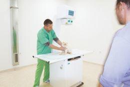 Рентген за домашни любимци - Ида Вет - Плевен - 02 - Ида Вет - Плевен